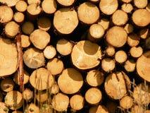Horizontaal beeld van gesneden die logboekstapel door de avondzonsondergang wordt verlicht Royalty-vrije Stock Fotografie