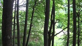 Horizontaal panorama van een vergankelijk bos, de mening van de vallei van boven tot onder HD videolengte met steadicam stock video