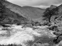 Horizontal écossais photographie stock libre de droits