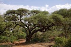 Horizontal 004 de l'Afrique Photographie stock libre de droits