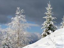 Horizontal 1 de l'hiver Images libres de droits