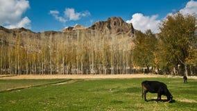 Horizontal afghan   Images libres de droits