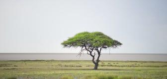 Horizontal africain Images stock