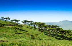 Horizontal africain Photos stock