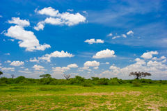 horizontal africain photographie stock libre de droits
