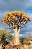 Horizontal africain, arbres de tremblement Image libre de droits