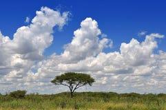 Horizontal africain avec des nuages Image stock