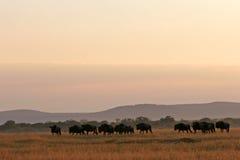 Horizontal africain de région sauvage Image libre de droits