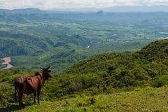 Horizontal africain. l'Ethiopie Photographie stock libre de droits