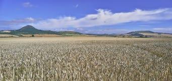 Horizontal agricole Images stock