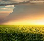 Horizontal agricole Photos libres de droits