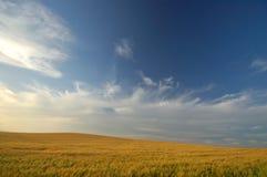 Horizontal agricole Photo stock