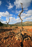 Horizontal approximatif avec l'arbre mort, Crète Images stock