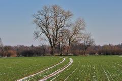 Horizontal arable photo libre de droits