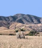 Horizontal aride et montagnes Photographie stock libre de droits