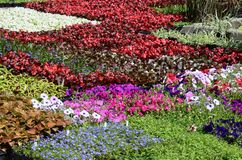 Horizontal array of flats of annuals Stock Photos