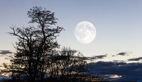 horizontal au crépuscule Photographie stock libre de droits