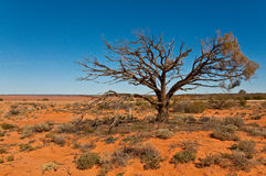 Horizontal australien Image libre de droits