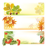 Horizontal autumn banners Stock Photos