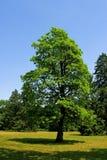 Horizontal avec des arbres Photographie stock