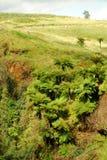 Horizontal avec des cycads et des fougères Photo libre de droits