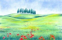 Horizontal avec des fleurs de pavot Images libres de droits