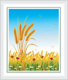 Horizontal avec du blé Photos stock