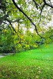 Horizontal avec l'automne en stationnement Photographie stock