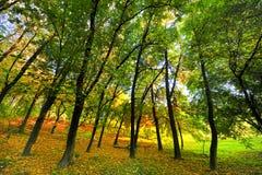 Horizontal avec l'automne en stationnement Image stock