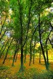 Horizontal avec l'automne en stationnement Photographie stock libre de droits