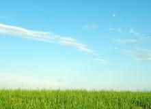 Horizontal avec l'herbe et le ciel Photo libre de droits