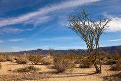 Horizontal avec l'Ocotillo Images libres de droits