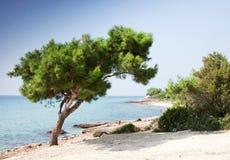 Horizontal avec l'olivier Photo libre de droits