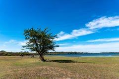 Horizontal avec le fleuve et les nuages photo stock