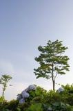 Horizontal avec le hydrangea Photographie stock