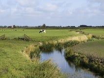 Horizontal avec le pré et les vaches Photo stock