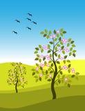 Horizontal avec les arbres fleurissants Photos libres de droits
