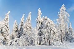 Horizontal avec les arbres neige-couverts Image libre de droits