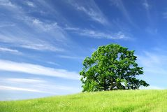 Horizontal avec un arbre image libre de droits