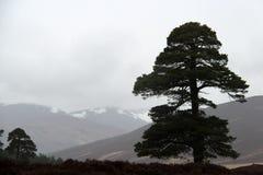 Horizontal avec un arbre Images libres de droits
