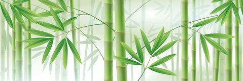 Horizontal background with green bamboo stems and leaves on whit Stock Photos