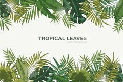 Horizontal background with green leaves of tropical palm tree, banana and monstera. Elegant backdrop decorated with