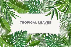 Horizontal background with green tropical leaves of jungle trees. Elegant backdrop decorated with frame made of foliage royalty free illustration
