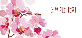 Horizontal background with red orchids Stock Photos