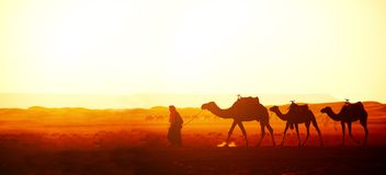Caravan of camels in Sahara desert, Morocco Royalty Free Stock Photography