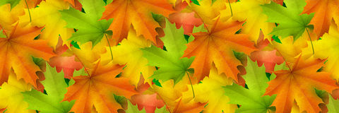 Horizontal banner, colored autumn leaves Royalty Free Stock Image