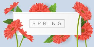 Horizontal banner with frame and red gerbera daisy flower. Horizontal banner for text with red daisy gerbera flower and green leaf. Vector illustration frame on Stock Photography