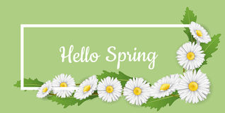 Horizontal banner frame with white daisy flowers. Horizontal banner spring frame, with white daisy flower, on green background. Hello spring message for nature Stock Photos