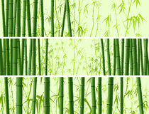 Horizontal banner with many bamboos. Royalty Free Stock Photography