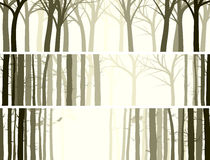 Horizontal banner with many tree trunks. Stock Photos
